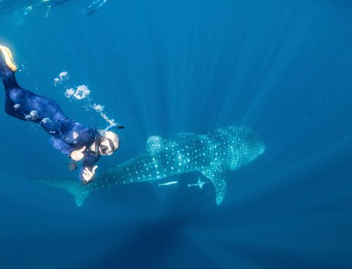 What is it about whale sharks and why do they make me happy?